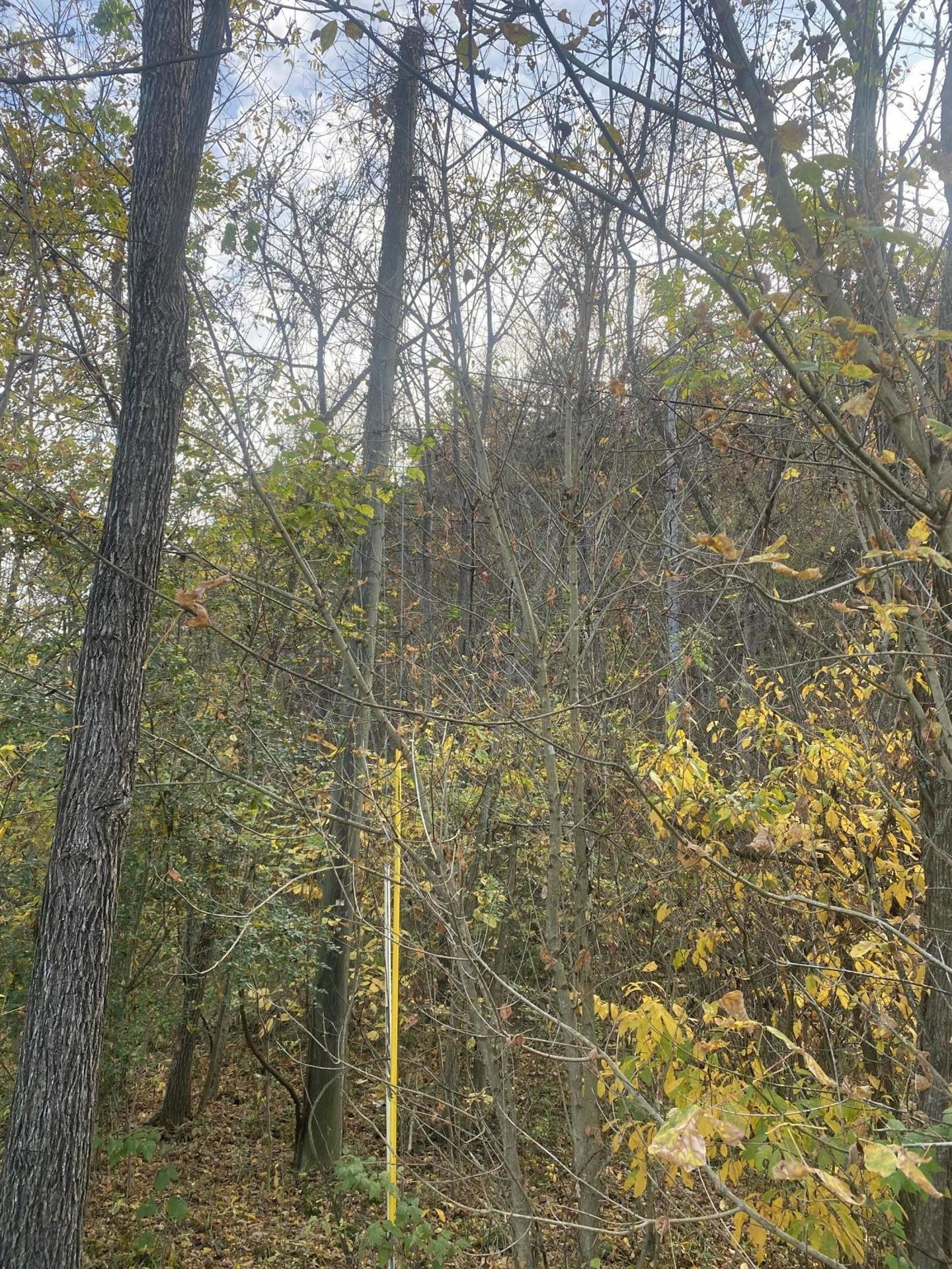 Photo of Tbd East Carters Valley Rd S Of Road, Kingsport, TN 37660 (MLS # 9914805)