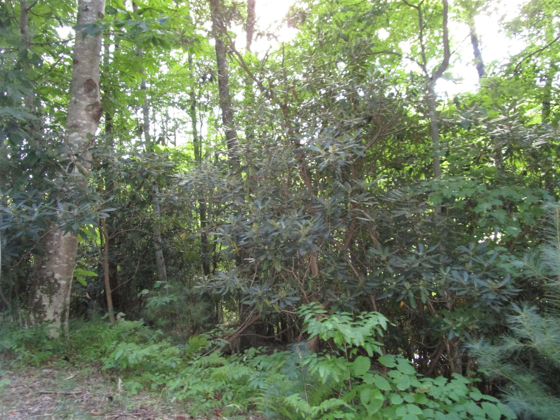 Photo of Lot 61 Wilderness Road, Unicoi, TN 37692 (MLS # 9928836)