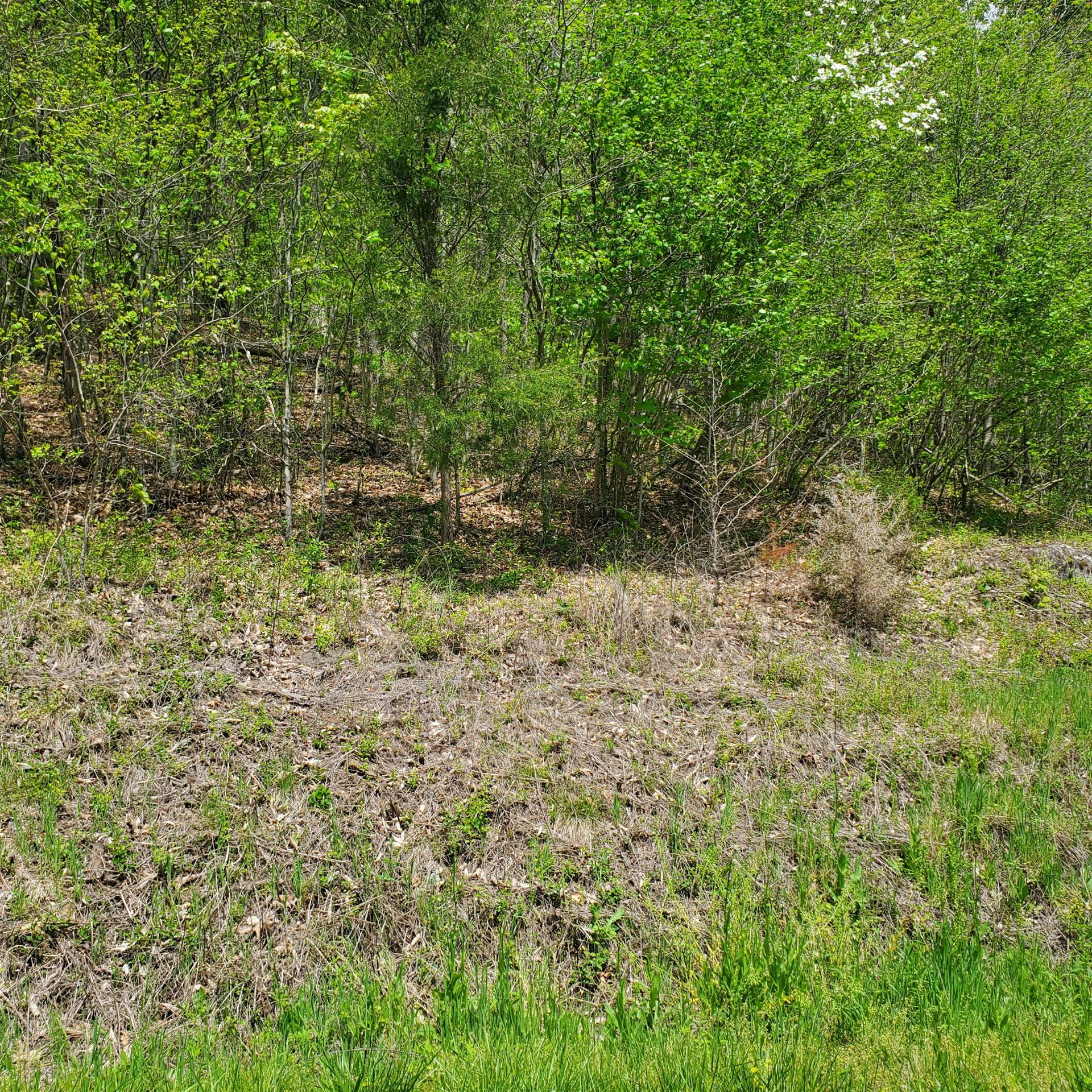 Photo of Lot 96 Whistle Valley Road, New Tazewell, TN 37825 (MLS # 9921898)