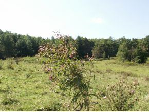 Tiny photo for Tbd Hwy 67 Se Of, Mountain City, TN 37683 (MLS # 324966)