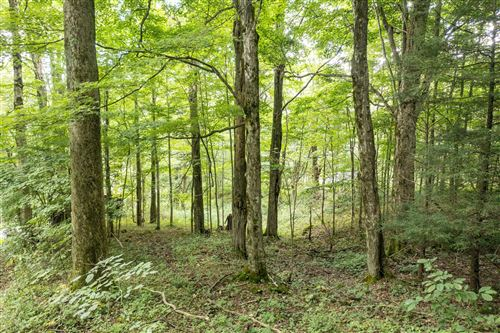 Photo of 00 Heaton Creek Road, Roan Mountain, TN 37687 (MLS # 9929974)