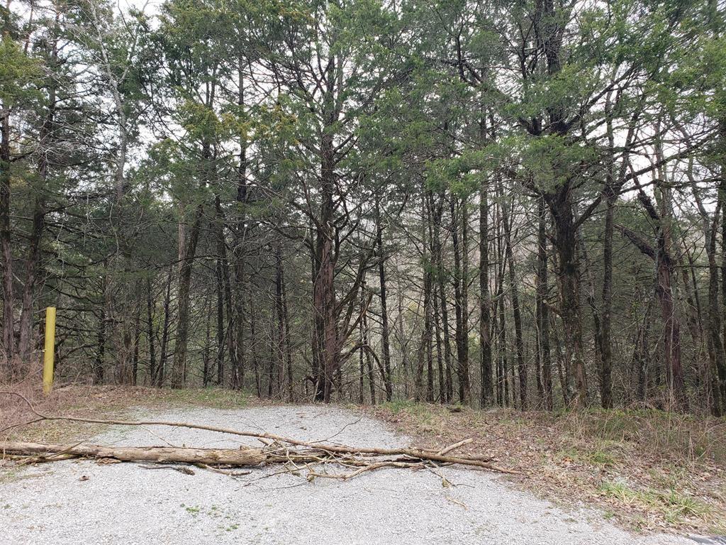 Photo of 3.16AC Austin Bottom Road, Baxter, TN 38544 (MLS # 203152)