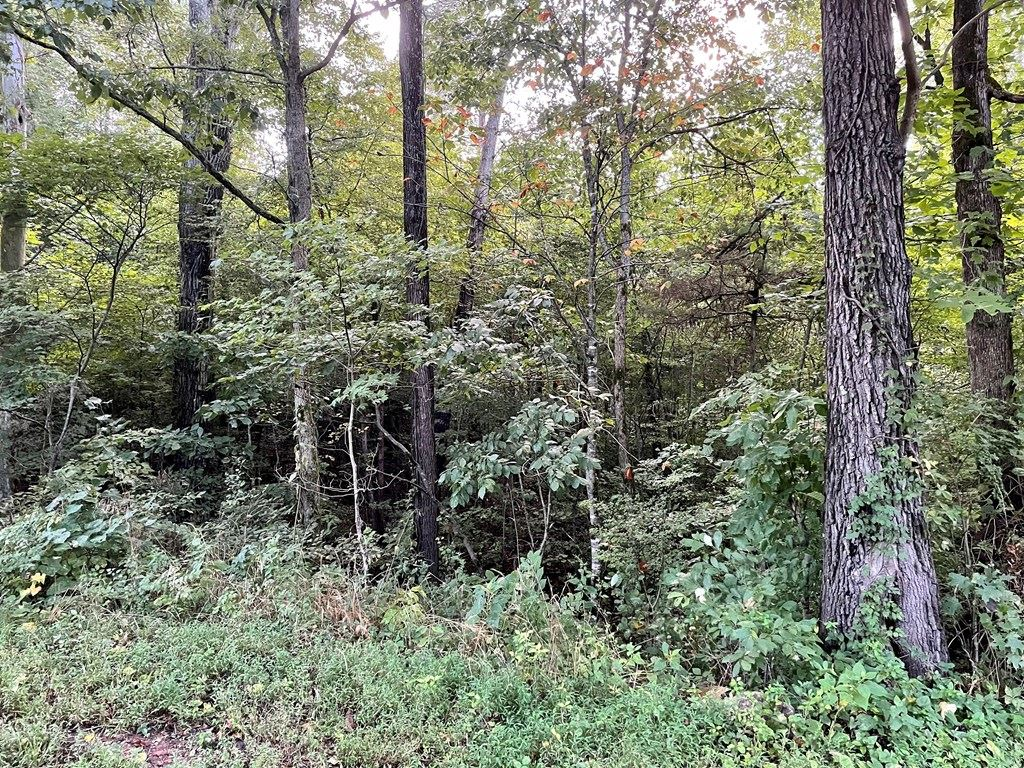 Photo of 0 Burgess Mill Rd, COOKEVILLE, TN 38506 (MLS # 206332)