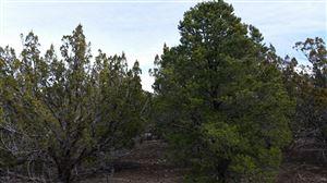 Photo of lot 62 Stanford, Vernon, AZ 85940 (MLS # 214604)