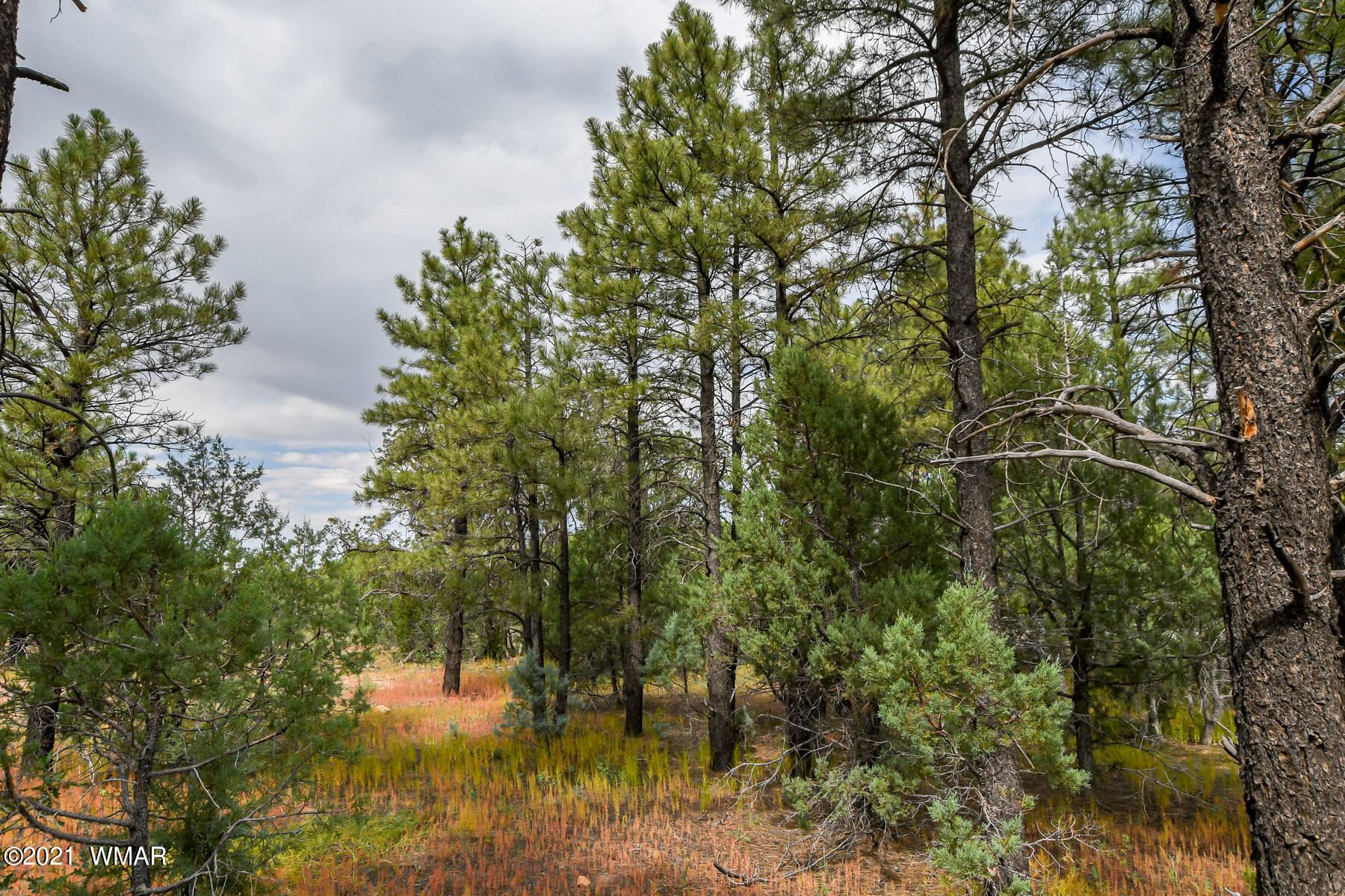 Photo for 1101 W Old Linden Road, Show Low, AZ 85901 (MLS # 237698)