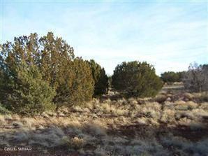 Photo of 8445 Cochise Circle, Show Low, AZ 85901 (MLS # 233749)