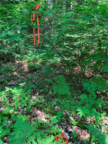 Photo of Lot 1 Blue Wing Bay Road, Bayfield, WI 54814 (MLS # 1551695)