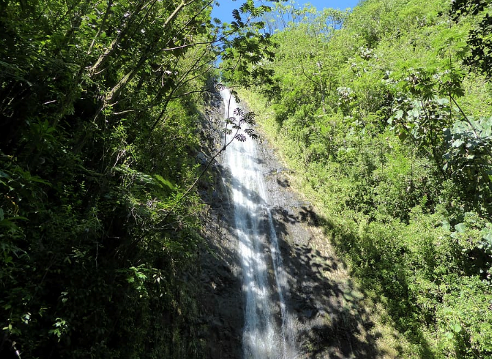 manoa falls hawaii oahu