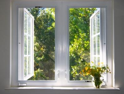 window-indoors-house-home-interior-flower-inside-of-tree-leaf-heat-autumn