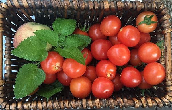 Tomatoes from Linda's graden
