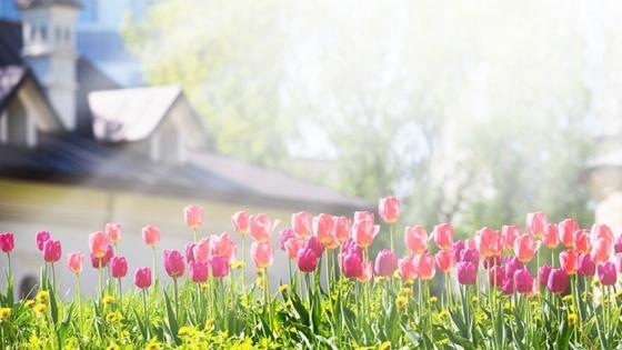 Spring Forward Blog Banner