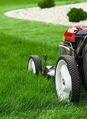 mower cutting healthy grass