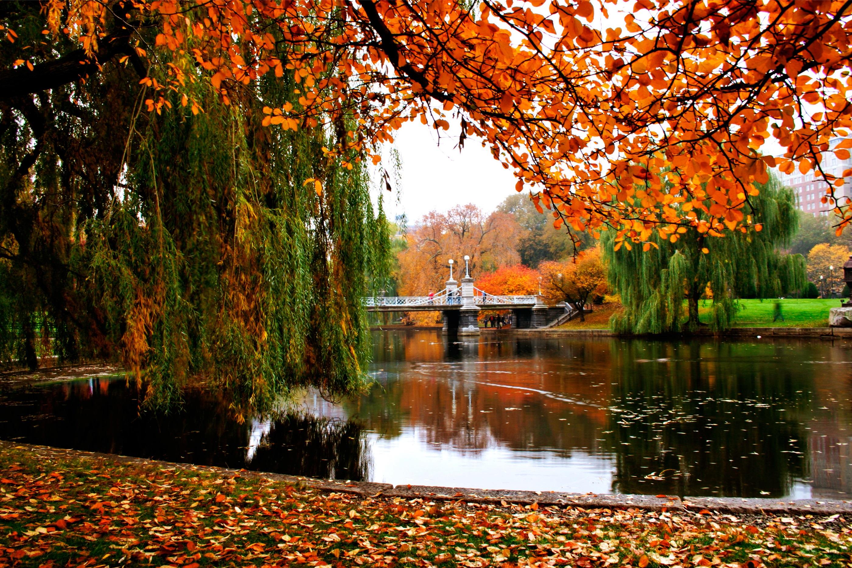 View-of-Boston-Public-Garden's-lake-in-Autumn--140380094_3072x2048