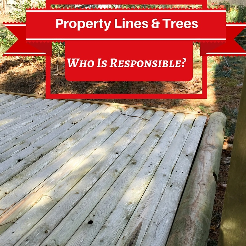 trees and property lines