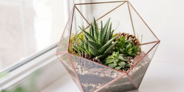 05.11.17-Housewarming-Gifts-succulent