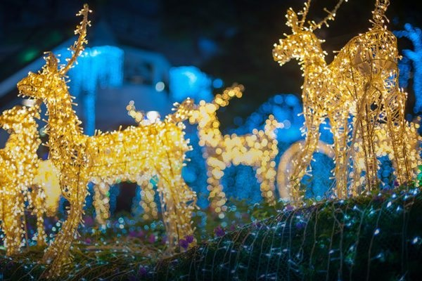 holiday_lights_spectacular_tbzoo-600x400