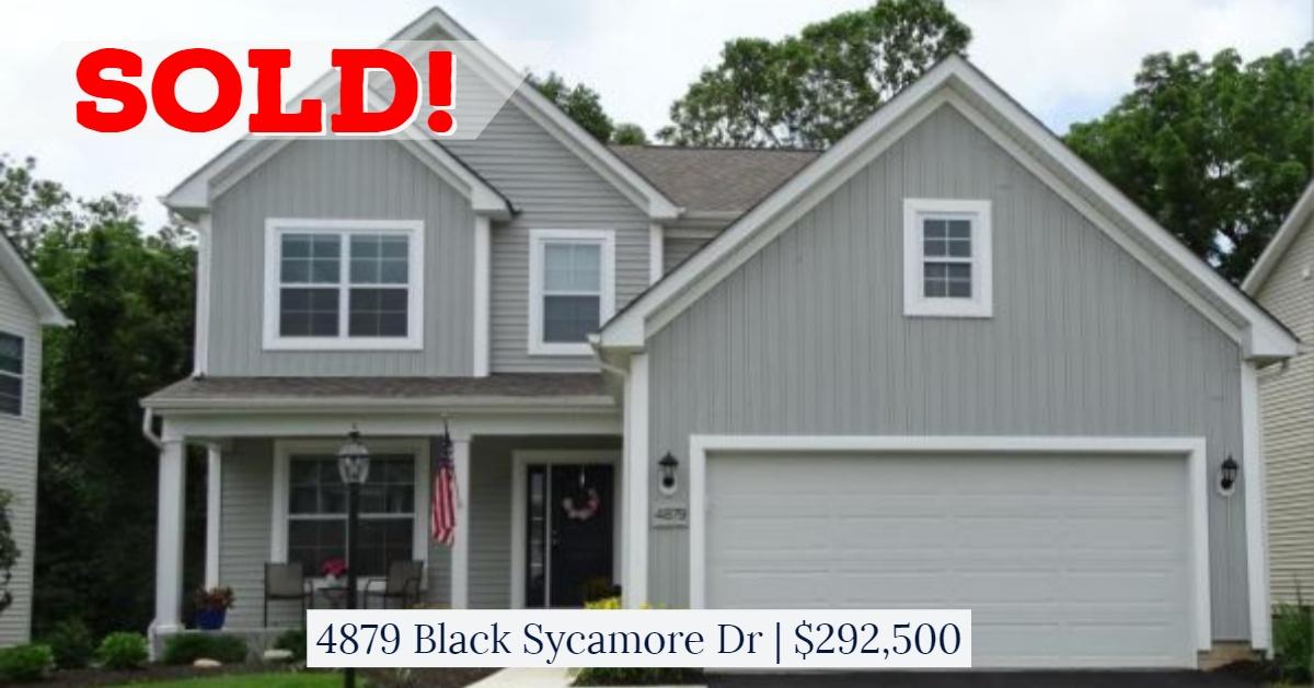 4879 Black Sycamore
