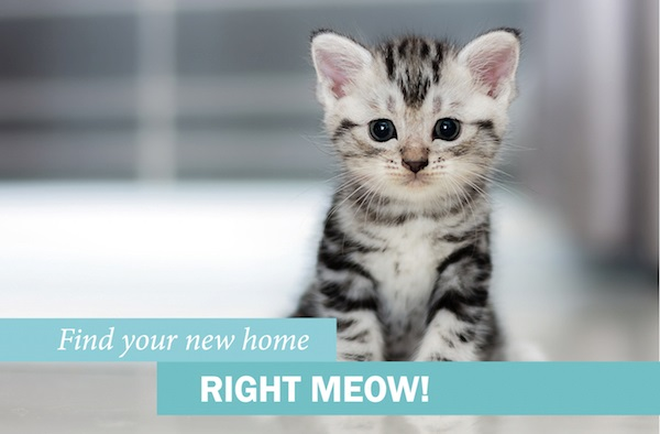 Find your new home RIGHT MEOW!
